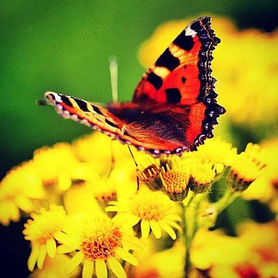 Macro Photograph - #macro #nature #flowers #butterfly by Luisa Azzolini