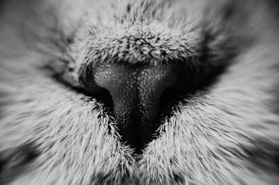 Portraiture Photograph - Macro Noses by Yevgeni Kacnelson