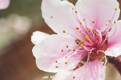 Nikon Digital Art - Macro Peach Blossom by Pair of Spades