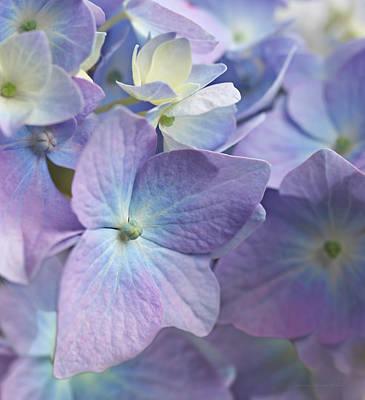Purple Hydrangea Photograph - Macro Purple Hydrangea Flowers by Jennie Marie Schell