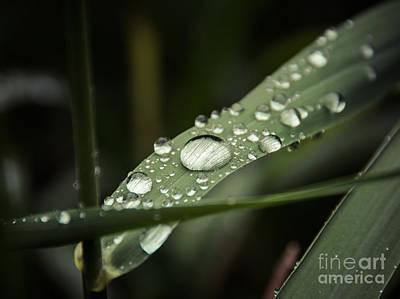 Photograph - Macro Rain by Cheryl Baxter