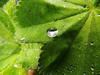 Art Print featuring the photograph Macro Raindrop On Leaf by Karen Horn