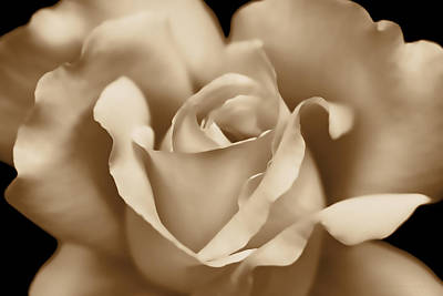 Photograph - Macro Sepia Brown Rose Flower by Jennie Marie Schell