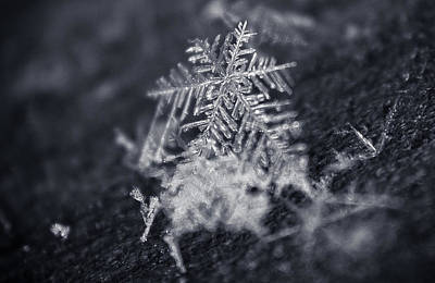 Photograph - Macro Snowflake by Amber Flowers