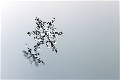 Macro Snowflake Art Print