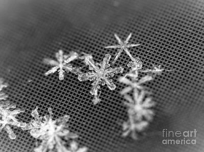Photograph - Macro Snowflakes by Cheryl Baxter