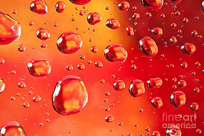 Photograph - Macro Water Beads  by Sharon Dominick