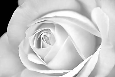 Photograph - Macro White Rose In Monochrome by Jennie Marie Schell