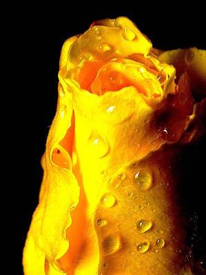 Photograph - Macro Yellow Rose 2 by Guy Pettingell