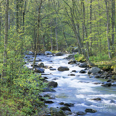 Photograph - Mad River Spring by Alan L Graham