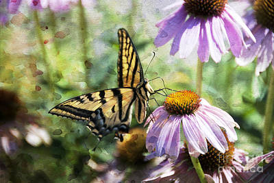 Coneflower Photograph - Madame Butterfly by Juli Scalzi