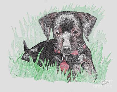 Dachshund Puppy Drawing - Madden by Calvert Koerber