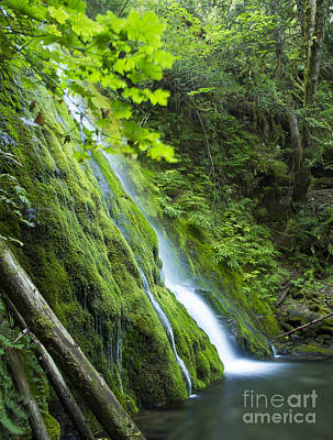 Photograph - Madison Creek by Idaho Scenic Images Linda Lantzy