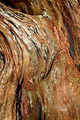 Photograph - Madrone Designs by Lynn Bawden
