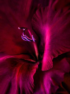 Magenta Gladiola Flower Art Print by Jennie Marie Schell