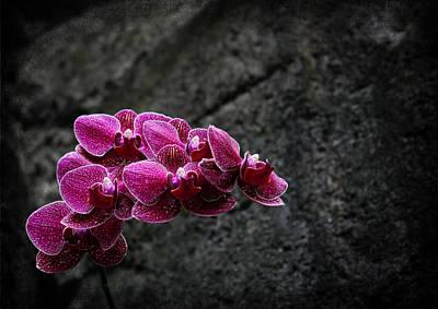Photograph - Magenta Magic by Judy Vincent