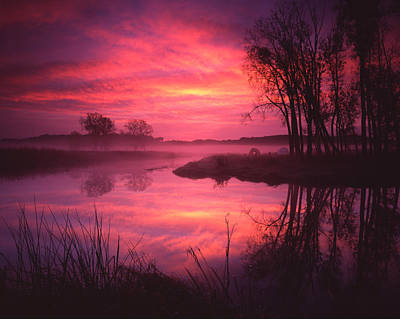 Magenta Morning Art Print by Ray Mathis