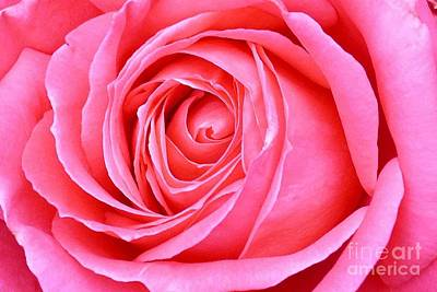 Art Print featuring the photograph Magenta Rose by Paul Clinkunbroomer