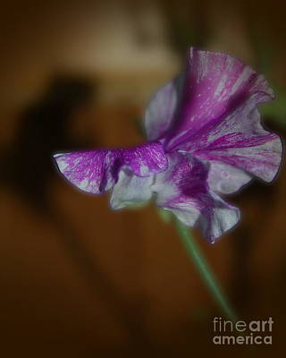 Photograph - Magenta Sweet Pea by Tamyra Crossley