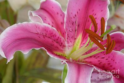 Magenta Tiger Lily Art Print