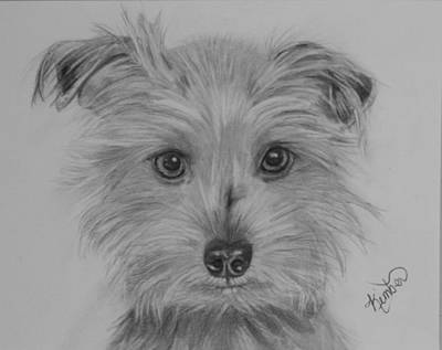 Drawing - Maggie by Kimber  Butler