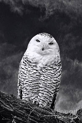 Photograph - Magic Beauty - Snowy Owl by Adam Olsen