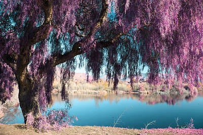 Willow Trees Photograph - Magic Can Happen by Laurie Search