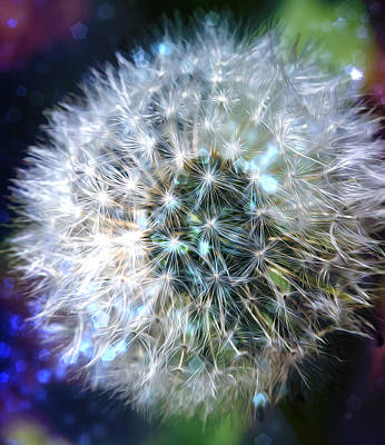 Dandelion Digital Art - Magic Dandy by Bill Tiepelman