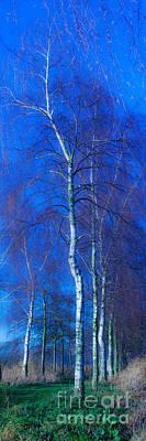 Photograph - Magic Forest-8 by Casper Cammeraat