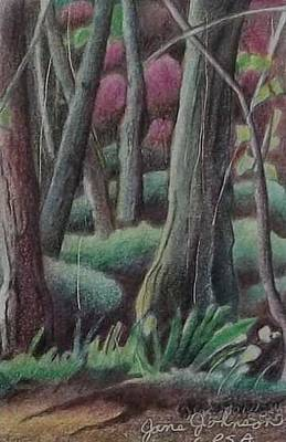 Drawing - Magic Forest by Jane Johnson