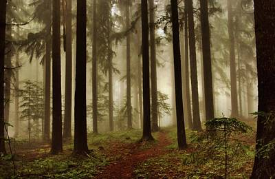 Styria Photograph - Magic Forest by Jose Carlos Fernandes De Andrade