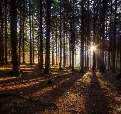 Photograph - Magic Forest by Nick  Shirghio
