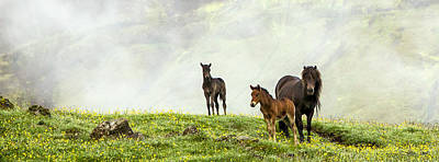 Broodmare Photograph - Magic In The Mist by Joan Davis