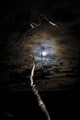 Photograph - Magic Light by Raffaella Lunelli