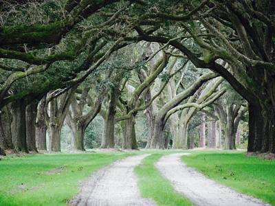 Magic Live Oaks Art Print by Patricia Greer