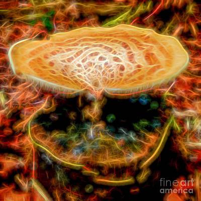 Photograph - Magic Mushroom-4 by Casper Cammeraat