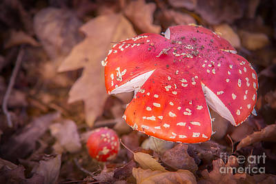 Photograph - Magic Mushroom by Ray Warren