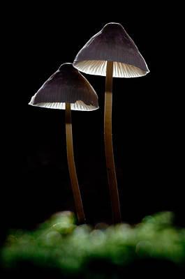 Wall Art - Photograph - Magic Mushrooms by Claus Puhlmann