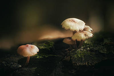 Of Autumn Photograph - Magic Mushrooms by Scott Norris