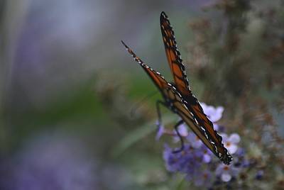 Photograph - Magic Of The Monarch -1 by Rae Ann  M Garrett