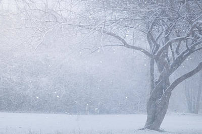 Snowstorm Photograph - Magic Of The Season by Carrie Ann Grippo-Pike