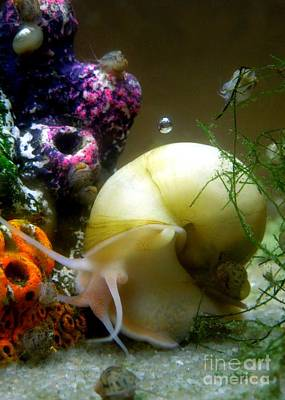 Photograph - Magic Orb Under The Sea by Renee Trenholm