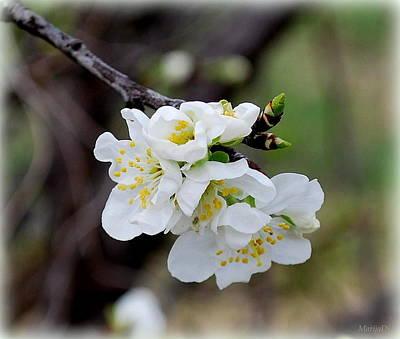 Photograph -  Spring by Marija Djedovic