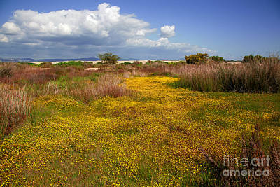 Ludo Photograph - Magic Yellow Carpet by English Landscapes