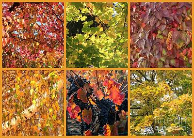 Grape Leaves Photograph - Magical Autumn Colors Collage by Carol Groenen