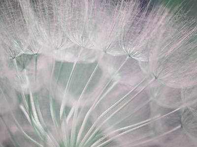 Dandelion Photograph - Magical Beauty by The Art Of Marilyn Ridoutt-Greene