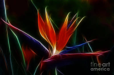 Photograph - Magical Bird Of Paradise by Sandra Bronstein
