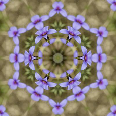 Magical Bluet Wildflower Kaleidoscope Art Print