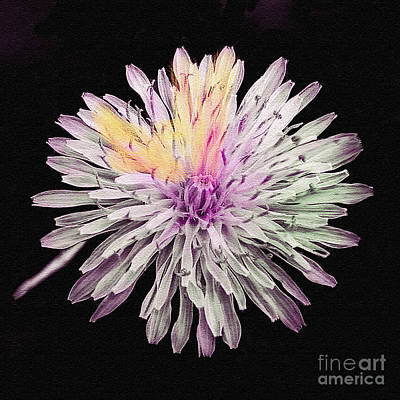 Photograph - Magical Chrysanthemum by Bob and Nadine Johnston