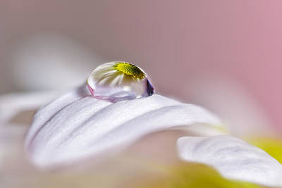 Flower Photograph - Magical Drop by Jes?s M. Garc?a